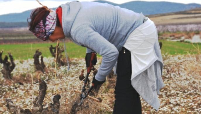 Empleos creados para jóvenes agricultores en el medio rural